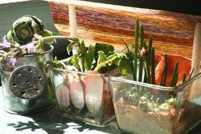recette - couche à semis de primeurs