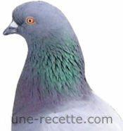 recettes pigeons