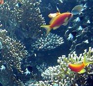 recettes poissons-(divers)