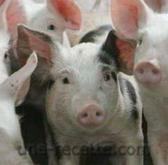 recettes porc